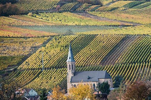 Anbau von deutschem Wein