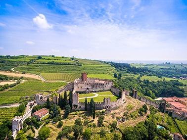 Anbau von italienischem Weißwein