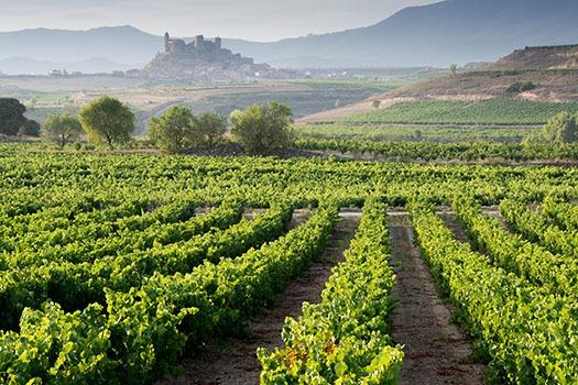 Spanische Weine im Anbau