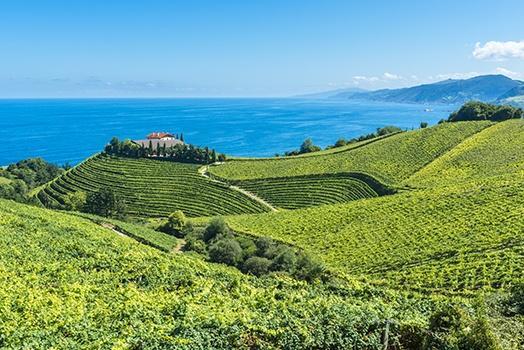 Spanischer Weißwein im Anbau