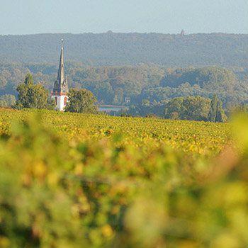 Das Weingut Baron Knyphausen