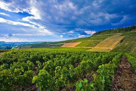Chablis in Burgund