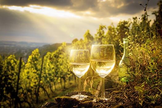 Chardonnay Wein