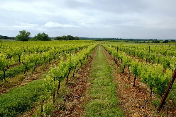 Das Anbaugebiet der Domaine de la Janasse
