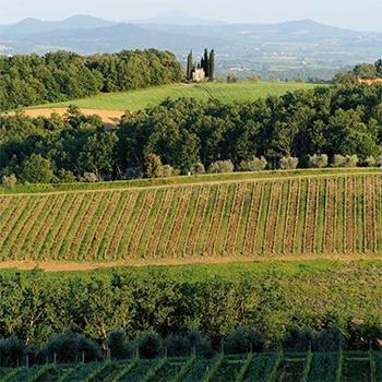 Weinberge des Weinguts Fèlsina