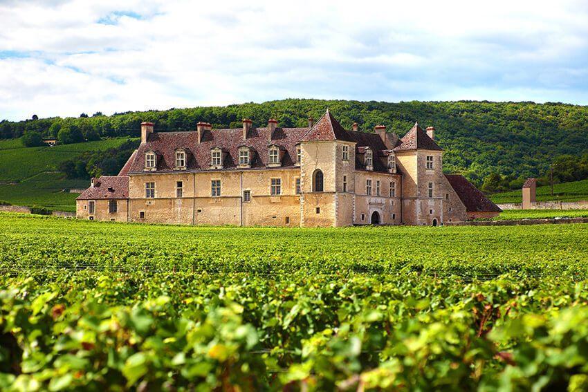 Französischer Weinberg mit Chateau