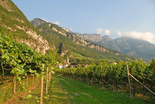 Weinberge des Weinguts Lageder