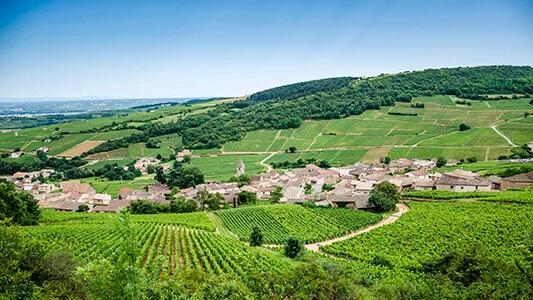 Weinberge an der Loire