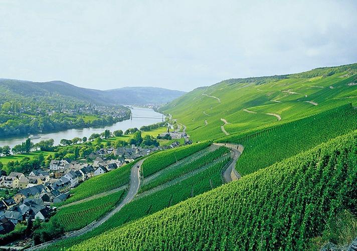 Weinberge des Weinguts Markus Molitor
