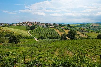 Anbaugebiet des Montepulciano