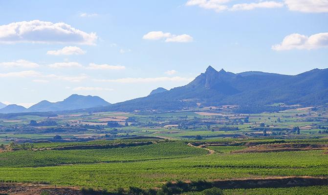 Spanische Rotweine im Anbau