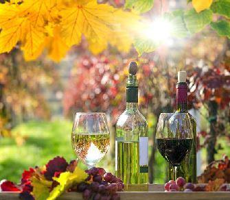 Verkostung von Pfalz Wein