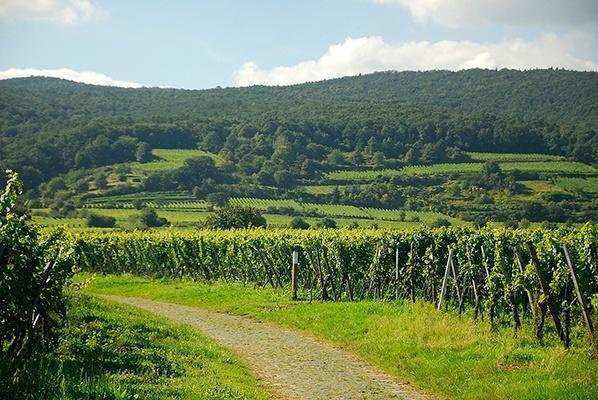 Weinberge des Weinguts von Winning