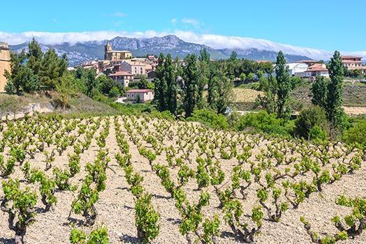 Weinanbau in Rioja, Spanien