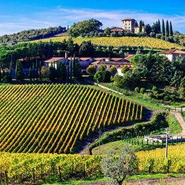 Weinanbau in Italien