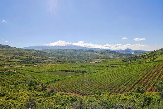 Weinanbau in Sizilien