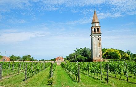 Weinanbau im Veneto