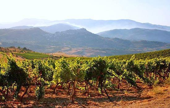 Weinberge des Weinguts di Giovanna