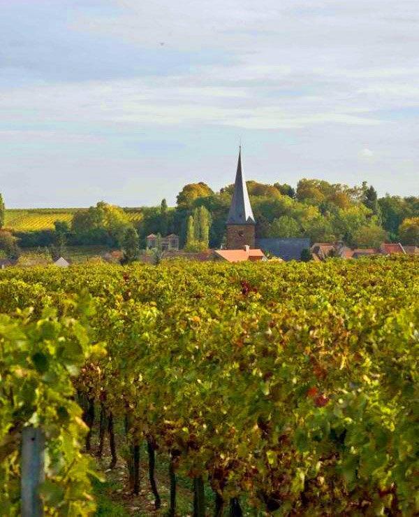 Weinberge des Weinguts Philipp Kuhn