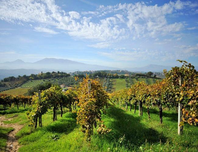 Die Weinberge von Saladini Pilastri