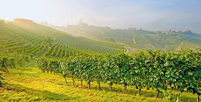 Weinberge des Weinguts Vietti