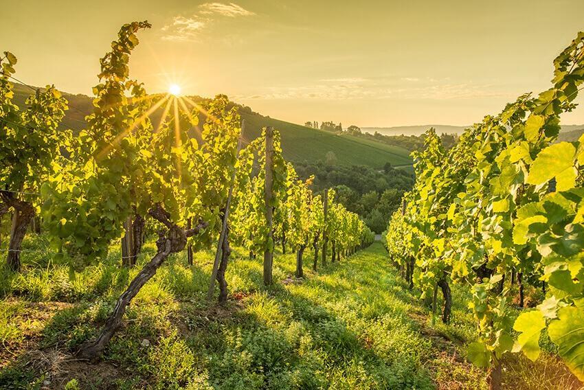 Weingut im Sonnenaufgang