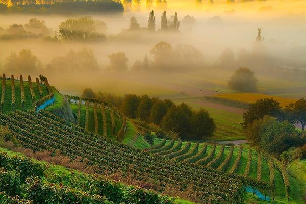 Das Weingut Kiefer im Markgräflerland
